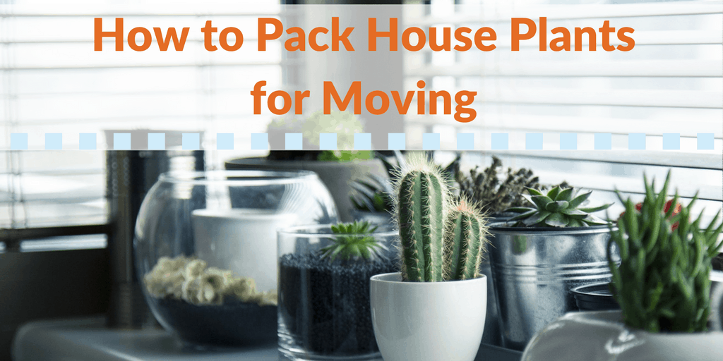 How to Pack House Plants for Moving
